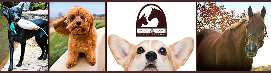 Hound and Hoof Pet Photography Louisville Blog header