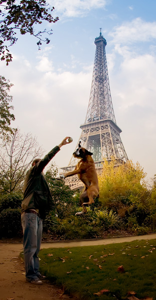 Dog in Paris in front of Eiffel Tower