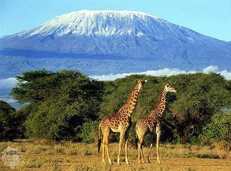 Mount Kilimanjaro- in the distance